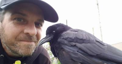 http://www.straight.com/news/929041/east-vancouver-crow-named-canuck-gets-death-threats-after-canada-post-refuses-deliver