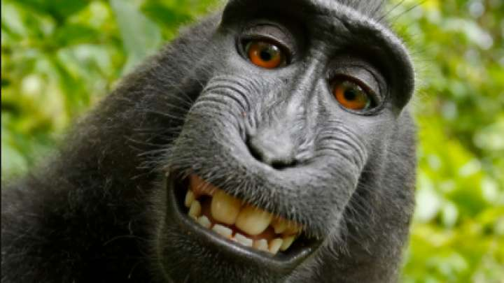 http://www.iflscience.com/plants-and-animals/photographer-being-sued-by-a-monkey-over-its-selfie-is-now-broke/